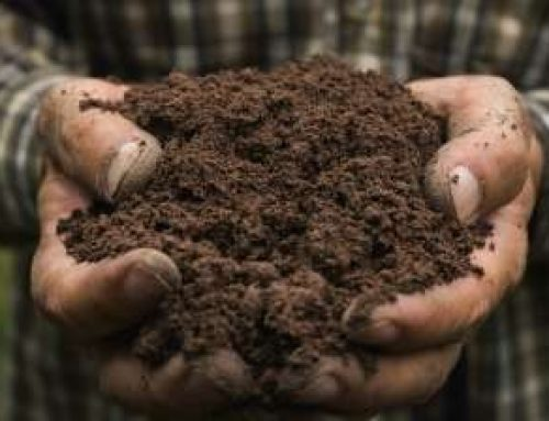 PRESS RELEASE: Take the Natural Path to Healthier Soil and Plants